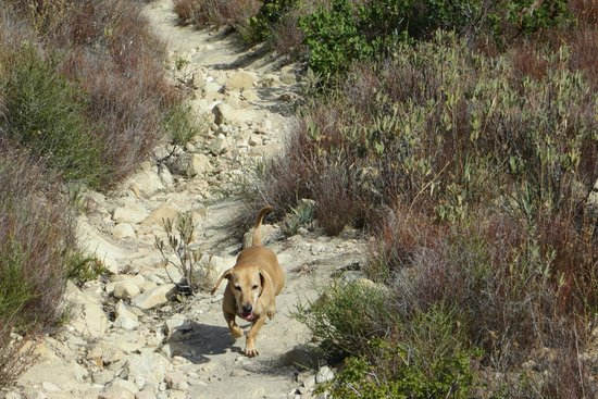Deukmejian Wilderness Park : dog loves trail blazing