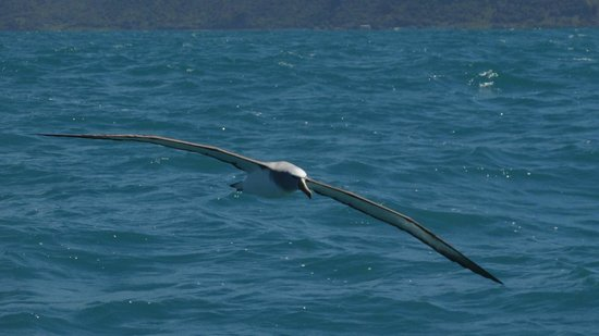 Albatross Encounter : One of 193 photos taken