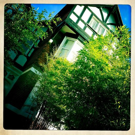 The Cloudesley: Front of property with the bamboo