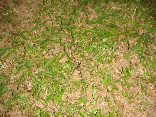 Mejia Lodge: Araña en la habitacion