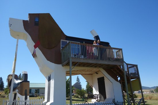 Dog Bark Park Inn: The deck outside your room, sleep in his belly