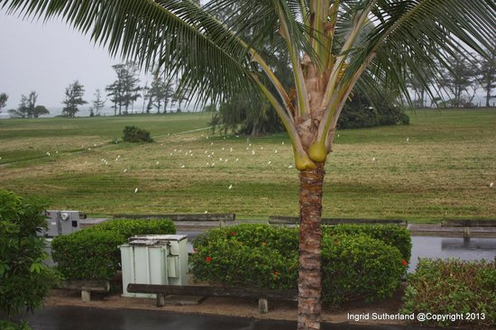 Plantation Hale Suites: The view from the room on another day