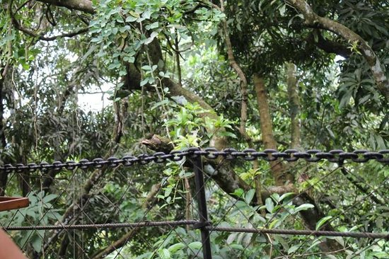 El Wagon : View from the table into the jungle