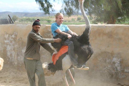 Highgate Ostrich Show Farm: Riding an ostrich