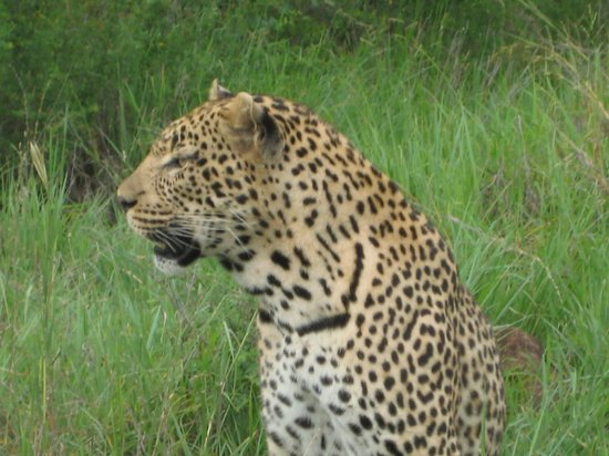 Idube Game Reserve Lodge : He never changes his spots!