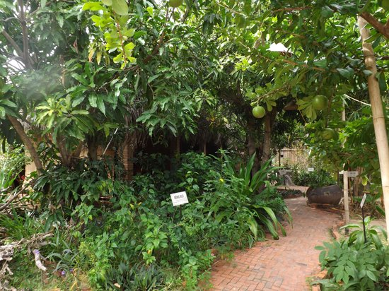 Mui Ne, Vietnã: Сад