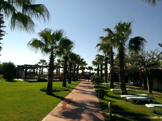 Saturn Palace Resort: Wunderschöne Allee zum Strand
