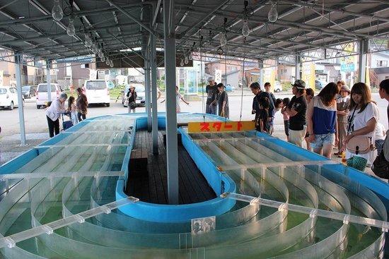 Kazama-mura Squid Center