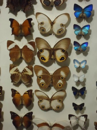 Western Australian Museum - Perth : Part of the scintillating butterfly display
