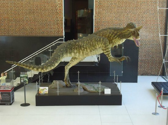 Western Australian Museum - Perth : As a zoologist I'm embarrassed to say I don't know the species, but an impressive Dino !