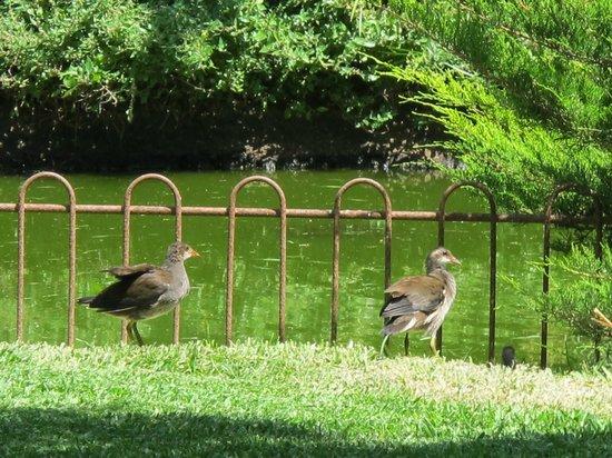 PortBlue Club Pollentia Resort & Spa : jardines del hotel