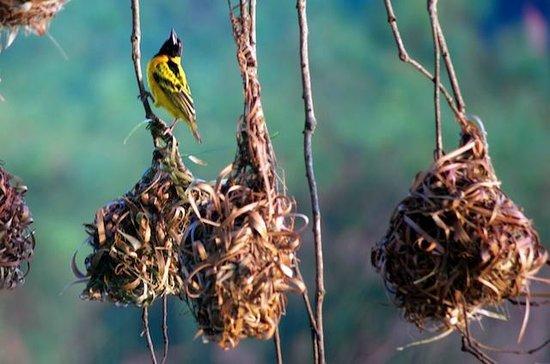 Lake View Resort Hotel: Quella Birds near the Lake