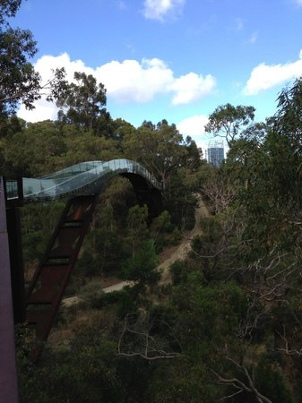 Lotterywest Federation Walkway : Tree top walk
