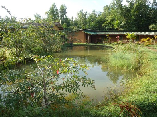 Mangrove Villa : Прудик с рыбками на территории