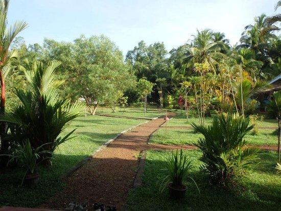 Mangrove Villa: Территория отеля