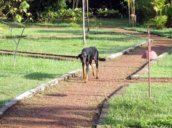 Mangrove Villa : Охранник