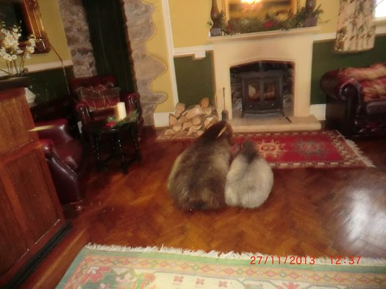 Plas Maenan Country House: Cosy fire share it with the sheep and a glass of something