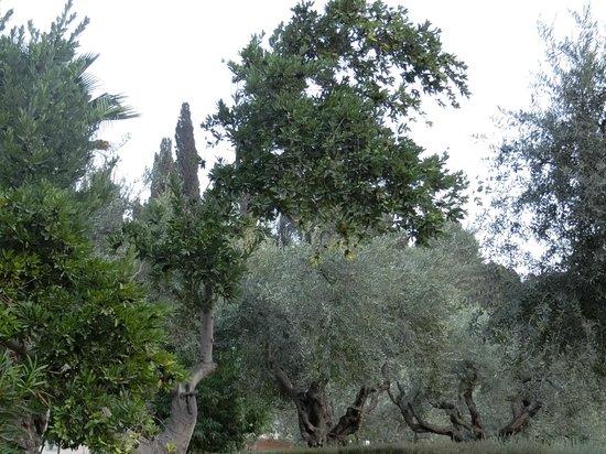 Haifa, Israel: Garten Gethsemane