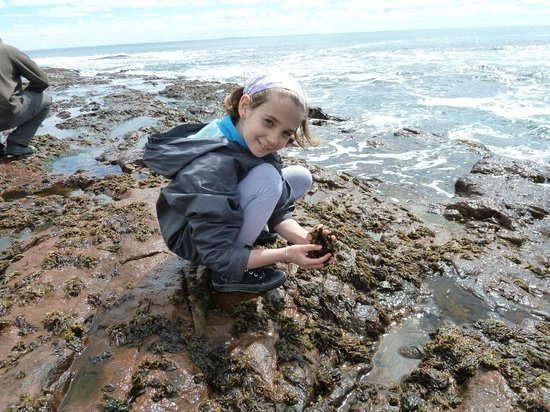 Granja Marina San Julian: Ramassage des algues