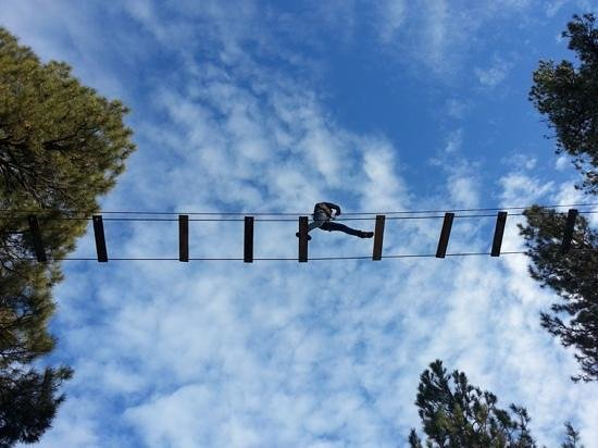 Flagstaff Extreme: High in the trees!