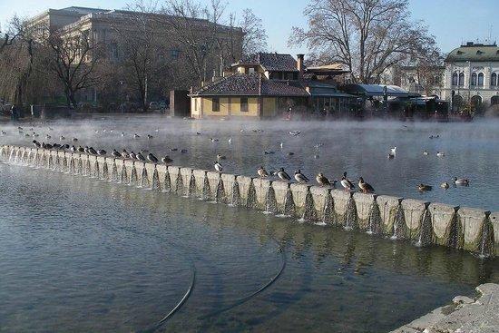Varosliget: утки принимают термальную ванну