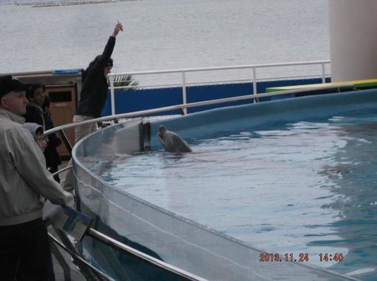 Texas State Aquarium : Dolphin tank