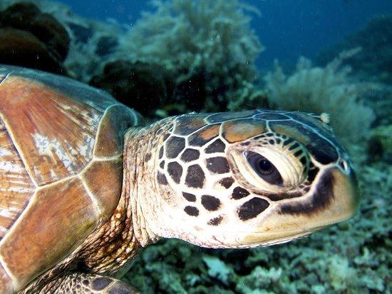 Tasik Ria Resort Diving - Menyelam