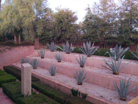 Hôtel Dar Sabra Marrakech : agaves