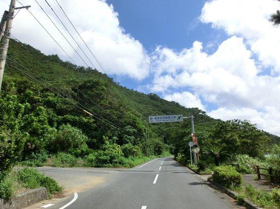 Amami Nature Observation Forest : 2
