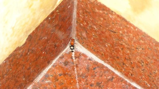 Q Signature Samui Beach Resort : bugs in bathroom