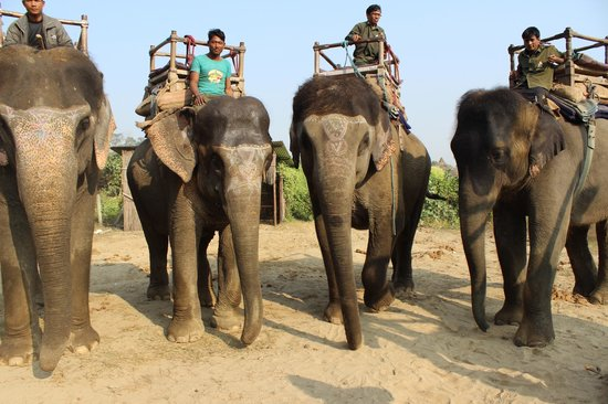 Narayani Safari Hotel: Awesome elephants!
