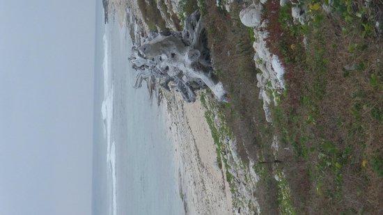 Turtle Nest Inn: Another beach walk