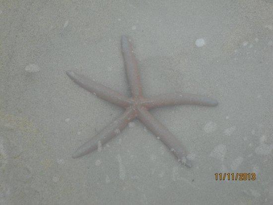 The Color Kata: нашли морскую звезду.Живую