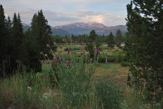 Headwaters Lodge & Cabins at Flagg Ranch : view from cabin
