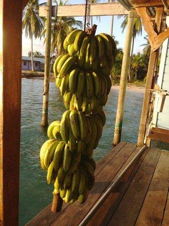 Casa Acuario: lots of bananas