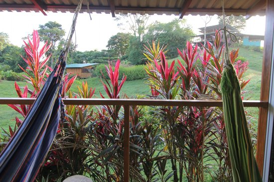 Finca Maresia: saw toucans and macaws