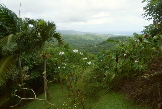 Flower Forest: Near Liv's Outlook, with distant views to the ocean