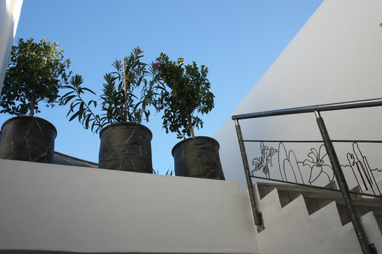Riad le Perroquet Bleu : Terrasse privée