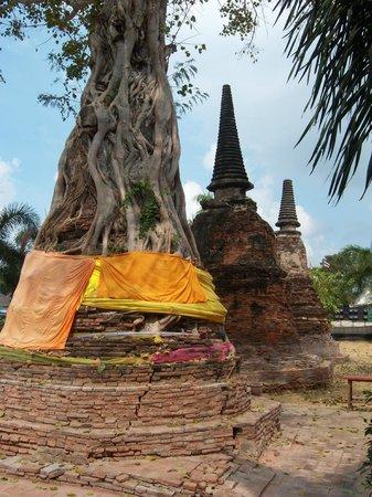 Temple of the Reclining Buddha (Wat Lokayasutharam) : Holy Banyan tree