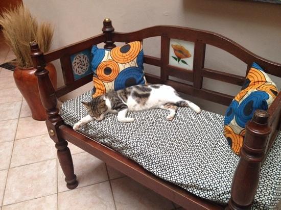 Keki House : hotel's resident cat