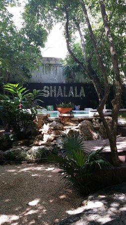 Ecolodge Shalala : La piscine