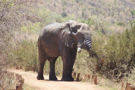 Pilanesberg National Park: Up close with a teenager