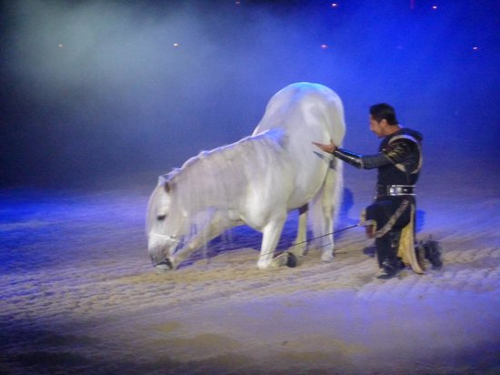 Medieval Times Dinner & Tournament: beautiful horses
