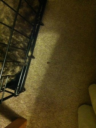 Big Indian, NY: bugs on carpet
