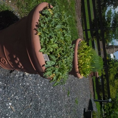 Hermitage Hill Farm and Stables : planters with veggies