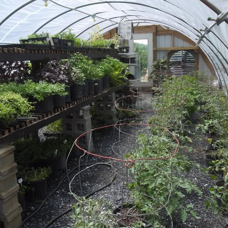 Hermitage Hill Farm and Stables : greenhouse in the spring