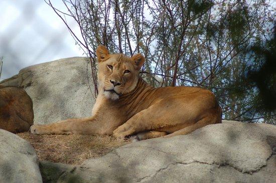 Dallas Zoo : Relaxing in the sun
