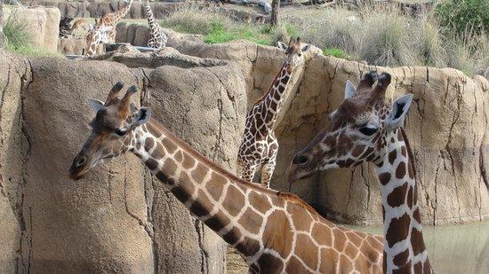 Dallas Zoo : Hi there