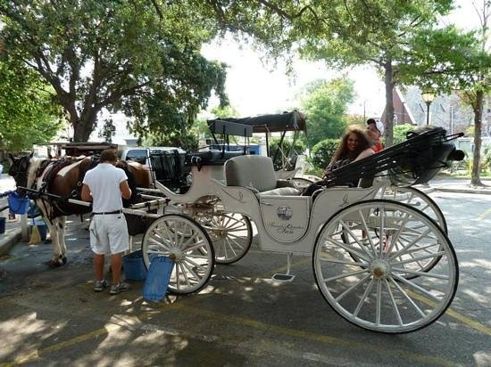 Palmetto Carriage Works: loved our private carriage tour!