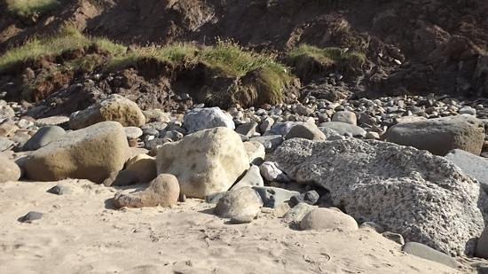Cayton Bay Holiday Park - Park Resorts : Cayton Bay is great for Fossil hunting.